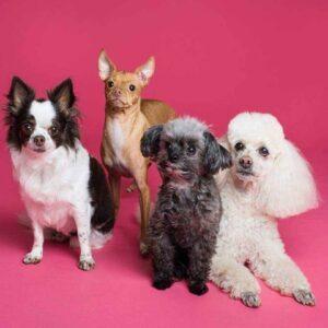Pet Food & Accessories